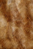 Fur texture. Background Royalty Free Stock Image