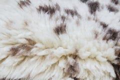 Fur texture. Close up of an animal colored fur texture Stock Photos
