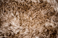 Fur Texture Stock Images
