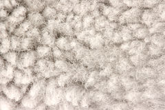 Fur texture detail Stock Image