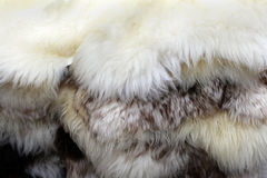 Fur texture Stock Photography