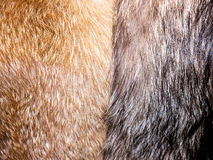 Fur texture. Fur texture (Luxury, fashion and wildlife Royalty Free Stock Photography