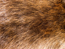Fur texture. Fur texture (Luxury, fashion and wildlife royalty free stock photo