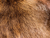 Fur texture. Fur texture (Luxury, fashion and wildlife Royalty Free Stock Photos
