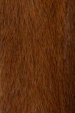 Fur texture. Royalty Free Stock Photos