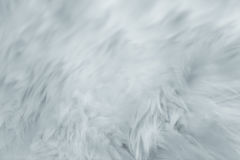 Fur texture. softly gentle smooth calm and subtle detail emotional Royalty Free Stock Photography
