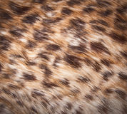Fur texture to background Stock Photo