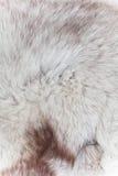 Fur texturerar Royaltyfri Foto