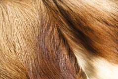 Fur textures Stock Images