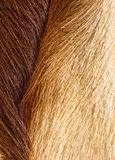 Fur textures. Abstract patterns in a closeup view of springbok animal fur Royalty Free Stock Photography