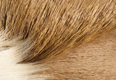 Fur textures Royalty Free Stock Image