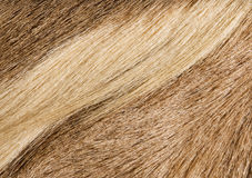 Fur textures Royalty Free Stock Photography