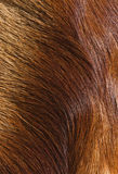 Fur textures. Abstract patterns in a closeup view of springbok animal fur Stock Photography