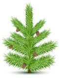 Fur-tree. Cones on green christmas fur-tree. Isolated object on white. Vector illustration Stock Image