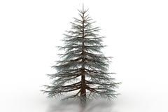 Fur tree. On white backround Stock Photo