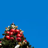 Fur tree with blue sky Royalty Free Stock Photos
