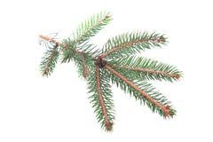 Fur-tree branch Royalty Free Stock Photo