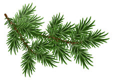 Fur-tree branch. Green fluffy pine branch. Isolated on white vector illustration Royalty Free Stock Photo