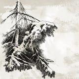Fur-tree branch. Hand drawn illustration Stock Image