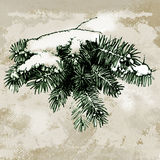 Fir-tree branch. Hand drawn illustration Royalty Free Stock Photography