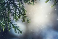A fur-tree branch Royalty Free Stock Images
