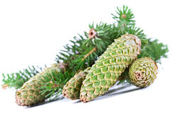 Fur-tree Branch With Cones Stock Photography