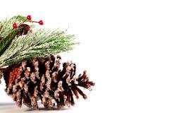 Fur-tree cone Stock Image