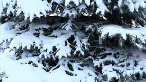 Fur-tree covered with snow. It is snowing in winter forest. Fur-tree branches covered with snow. Christmas tree in snow in winter forest. Fairy-tale beautiful stock video footage