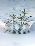 Fur-tree In Snow Royalty Free Stock Photos