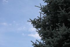 Fur-tree ordinary against the sky Royalty Free Stock Photo
