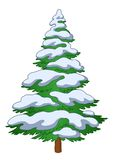 Fur-tree with snow. Christmas fur-tree with snow, winter symbol, isolated object Royalty Free Stock Photos