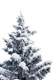 Fur-tree under snow Stock Photos