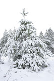 Fur-tree under a snow layer Royalty Free Stock Photos