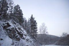 Fur-trees on a mountain slope Stock Photos