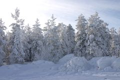 Fur-trees and pines covered by a snow Stock Photos