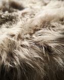 Fur royalty free stock photo