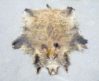 Fur of wild boar. Exposed on concrete background Stock Photo