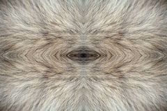 Fur of wolf. Abstract background, fur of wolf. Digital retouch stock photography