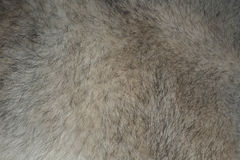 Fur of wolf. Royalty Free Stock Photo