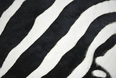 Fur of a zebra Royalty Free Stock Images