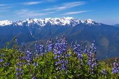 Furacão Ridge Fotografia de Stock