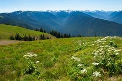 Furacão Ridge Imagens de Stock