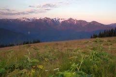 Furacão Ridge Olympic Range National Park Washington EUA do por do sol Fotografia de Stock