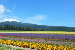 Furano Royalty Free Stock Photo