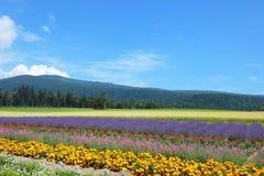Furano. Colorful Furano flower field,Hokkaido, Japan Royalty Free Stock Photo