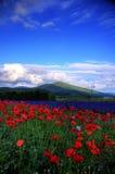 Furano, Hokkaido Royalty Free Stock Images