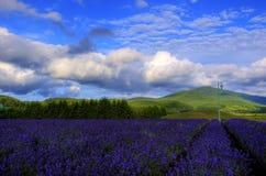 Furano, Hokkaido Stock Fotografie