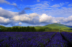 Furano, Hokkaido Stock Photography
