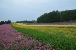 Furano Japan. Flower farm in furano japan landscape Royalty Free Stock Image