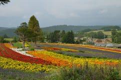 Furano Japan. Flower farm in furano japan landscape Royalty Free Stock Photography